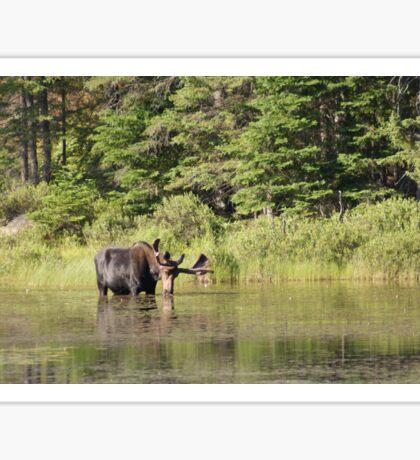 Muskoka Moose Sticker