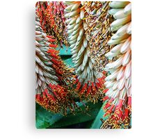 Agave Skirts Canvas Print