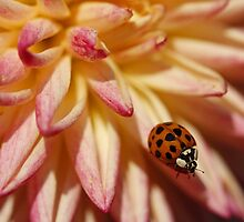 Ladybug on a perch by Manon Boily