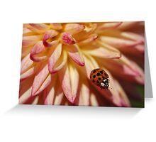 Ladybug on a perch Greeting Card