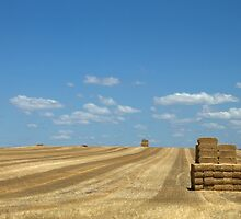Hay Fields by threewisefrogs