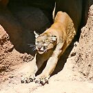 Cougar Stretch... by RichImage