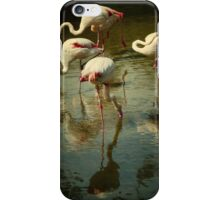 Flamingos iPhone Case/Skin