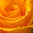 YELLOW ROSES-3  - Calendar Image  ^ by ctheworld