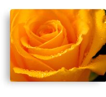 YELLOW ROSES-3  - Calendar Image  ^ Canvas Print