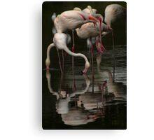 More Flamingos Canvas Print