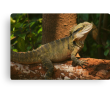 Happy Year of the Water Dragon .. 2012 Canvas Print