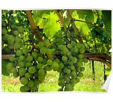 Walking through the Vineyard    ^ Poster