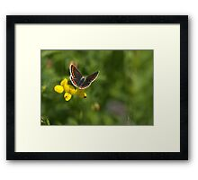 Flora - Brown Argus Framed Print