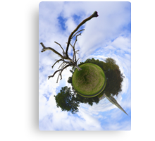 Dead Elm Tree in Brooke Park, Derry Canvas Print