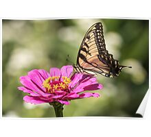 Eastern Tiger Swallowtail 2016-1 Poster