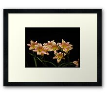 Day Lily Pastels Framed Print