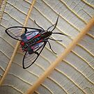 Wasp Moth by jimmy hoffman