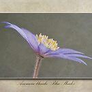 Anemone blanda Blue Shades by John Edwards