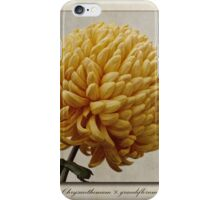 Chrysanthemum grandiflorum Yellow iPhone Case/Skin