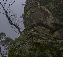 Tree tung rock by Niisophotos