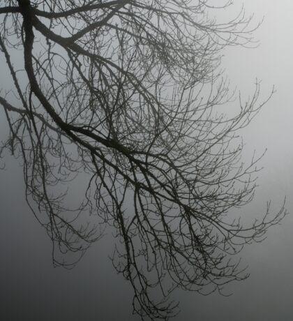 Branches in the mist Sticker