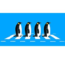 The Penguins Photographic Print