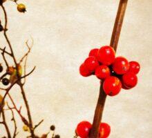 Cherry berry Sticker