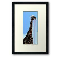 giraffe drips Framed Print