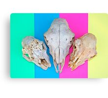 Triple Skulls on Striped Background Canvas Print