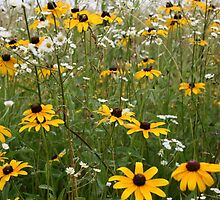 MORE WILDFLOWERS IN THE OZARKS by Brenda Planchon