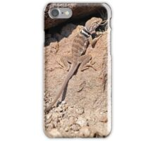 Great Basin Collared Lizard iPhone Case/Skin