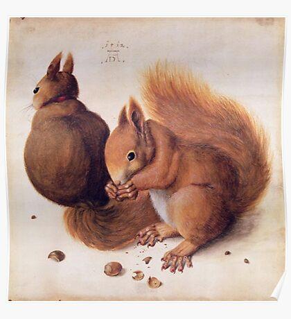 Red Squirrels by Albrecht Durer Poster
