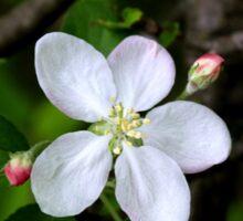 White Beauty Blossom  Sticker