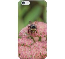 Bee Pollinating Sedum iPhone Case/Skin