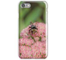 Bee Pollinating Sedum iPhone Case/Skin