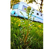 Camping Beauty Photographic Print