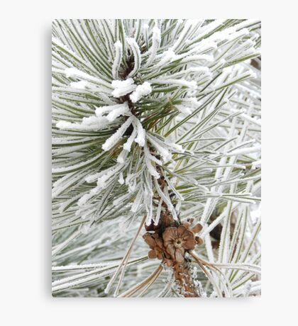 Frosty December Morning 10 Canvas Print
