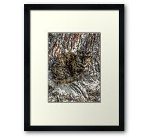 Cat Mimetism Framed Print