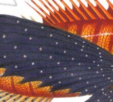 Pterois - Lionfish Sticker