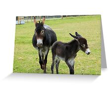 Jenny and foal Greeting Card