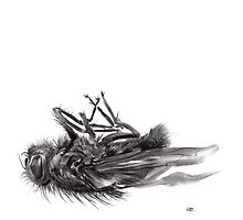 little things too, senescence I3 - charcoal drawing Photographic Print