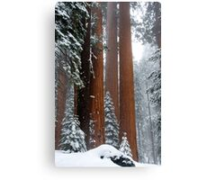 Giant Sequoia's #1 Canvas Print