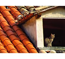 Cat on a hot tiled roof Photographic Print