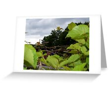 Vines and wire Greeting Card