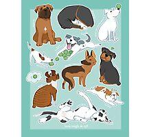 UnTough Dogs | Look Tough, Be Soft | Doberman Mastiff Great Dane German Shepherd Staffordshire Terrier Rottweiler Boxer Bull Terrier Bulldog Pit Bull No BSL Photographic Print