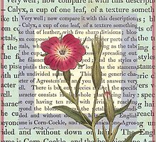 Antique Field Flower Illustration by AntiqueImages