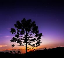 Araucaria Under Orion by MiVisions