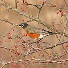December Robin by Lesliebc