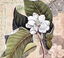 Antique Magnolia Collage by AntiqueImages