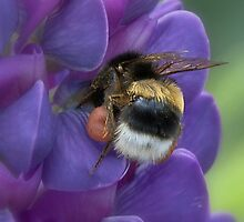 Bags full of pollen by Thea 65