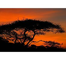 Serengeti Sunrise Photographic Print