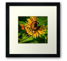 SWALLOWTAIL ON SUNFLOWER Framed Print
