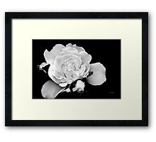 Rose Black and White Framed Print