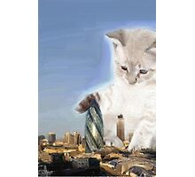 cat plays with gherkin Photographic Print